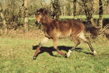 hello, I'm a flying pony by horsdemavue