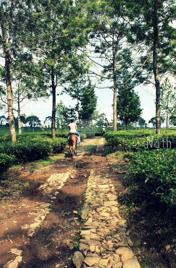 Tea Garden by Nath1101