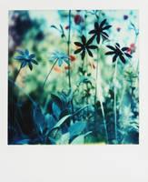 Pola - everlasting flowers by mathildedn