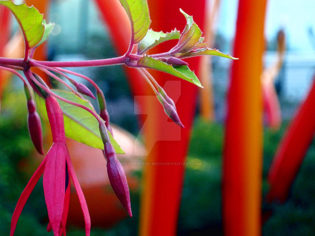 Fuschias with Glass Sculpture by Sing-Down-The-Moon