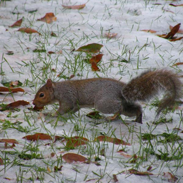squirrel by EllieZ