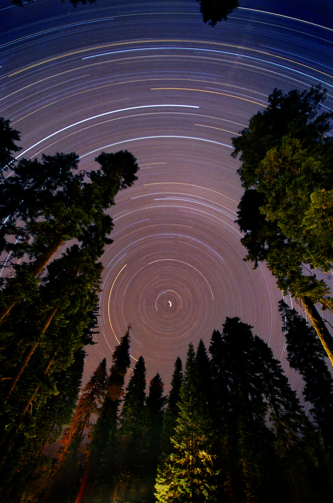 Sequoia Star Trail 01 by Dilznacka