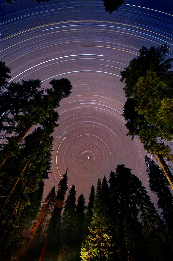 Sequoia Star Trail 01 by Dilznacka