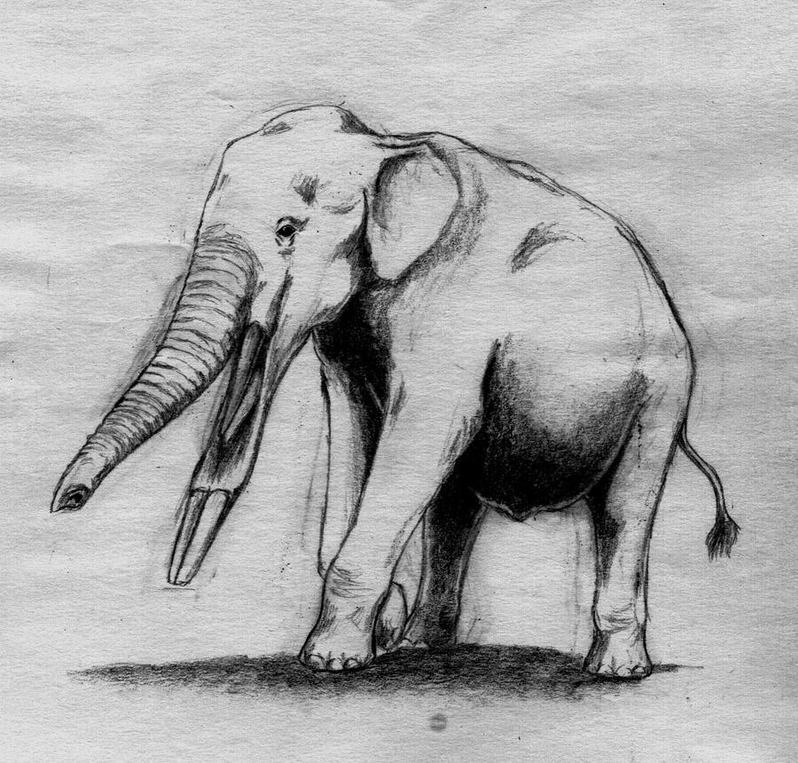 Elephantoidea by Asanbonsam