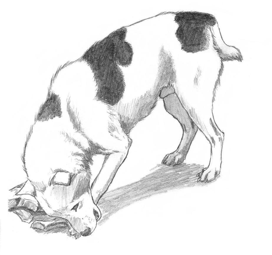 Hyena Dog by Asanbonsam
