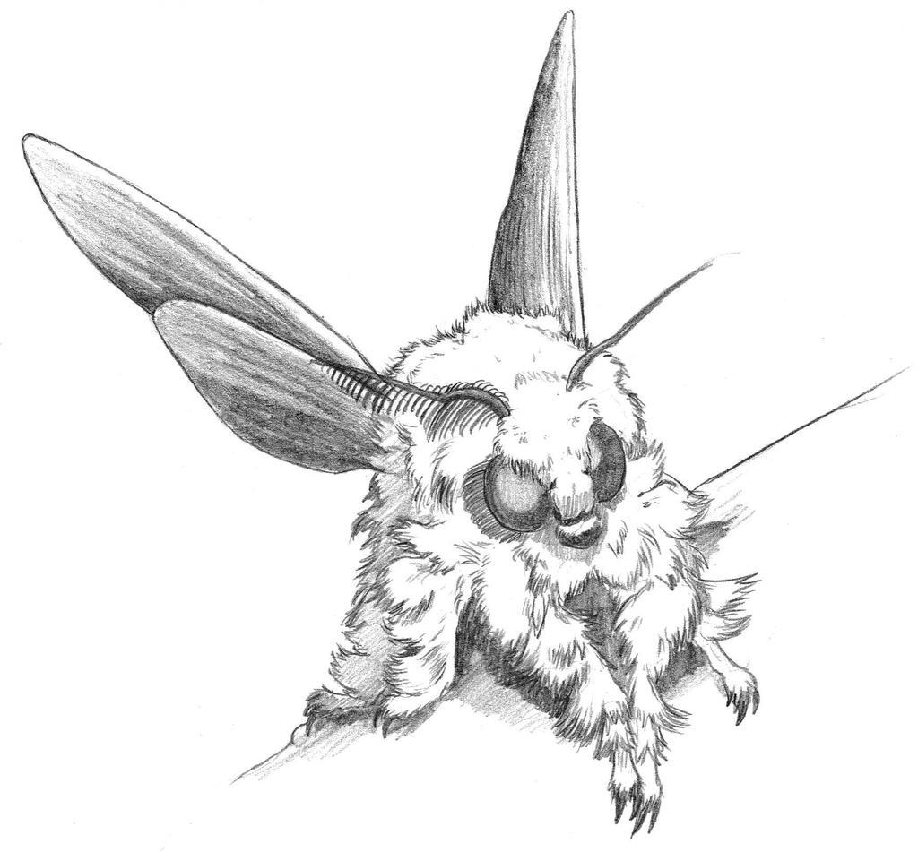 Moth drawing - photo#35