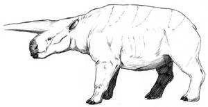 Dryotherium-monocerarius