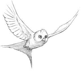 Owl parrot by Asanbonsam