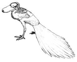 allocene duck