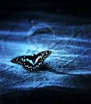 butterfly 8 by AZ-designer