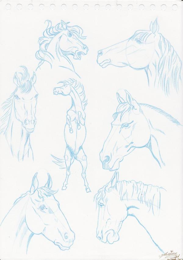 horses by EarendilNenya