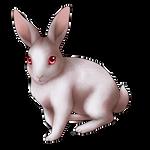 Sinister Rabbit Companion by Shivali-Lorekeeper