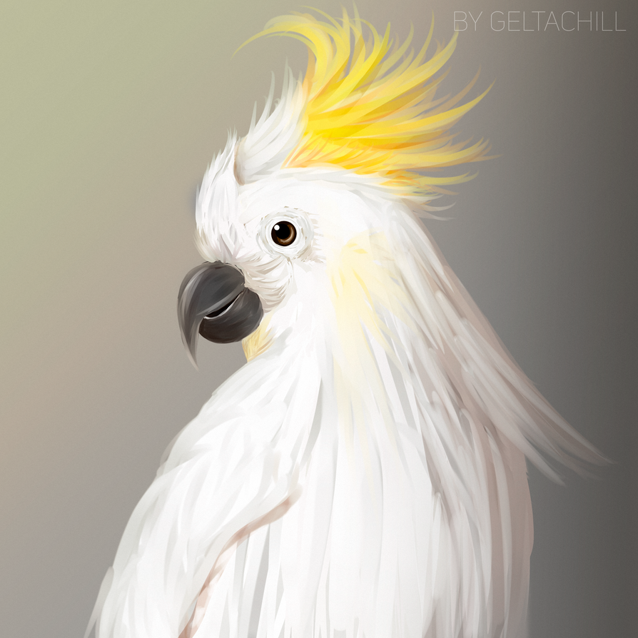 parrot by Gelta-chill