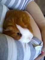 Cuddle Pig by BloodRose1993