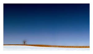 Clear Blue Sky Days by draym
