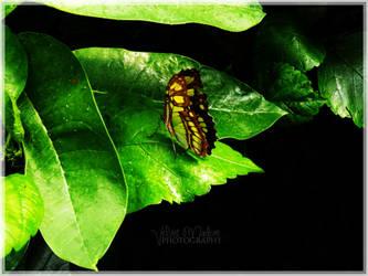 Beautiful Green Butterfly by Velvet87