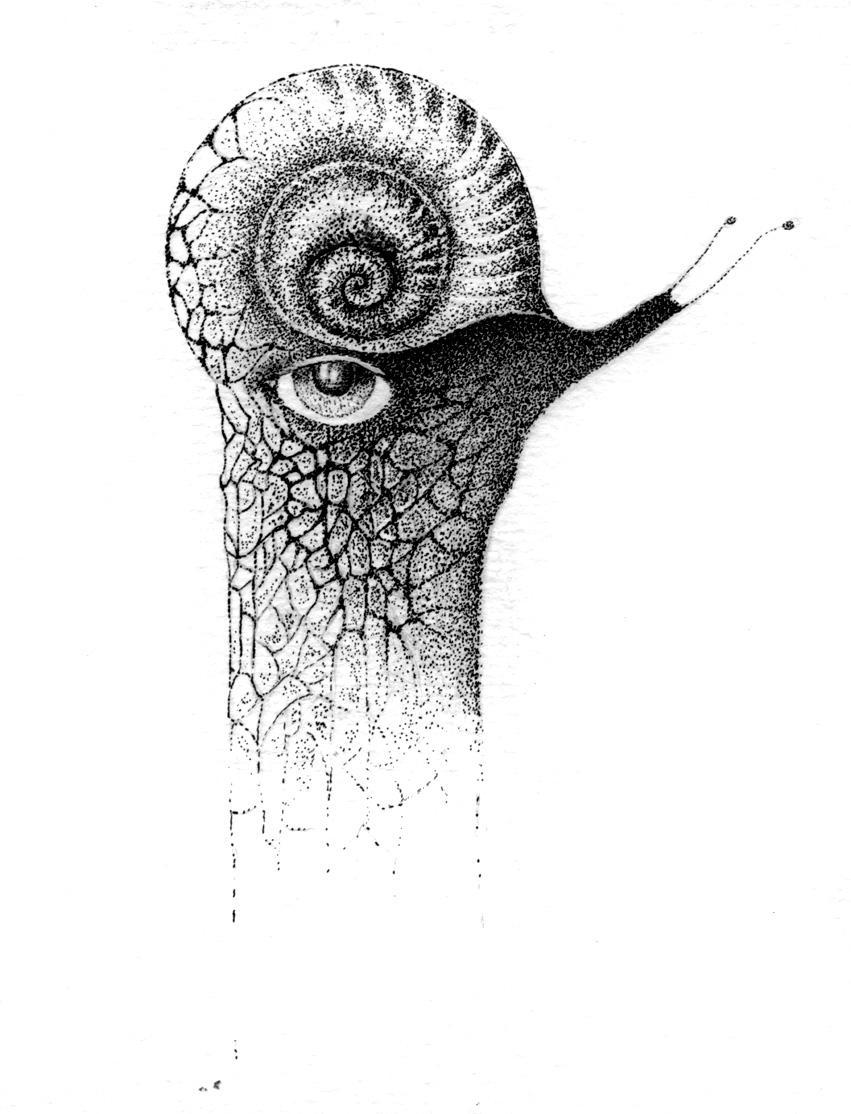 Snail by Rorkas