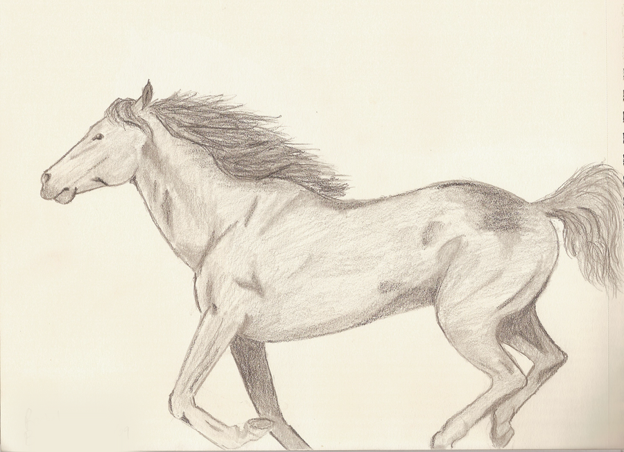 Running horse drawing easy - photo#28