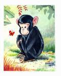 monkey pan troglodytes