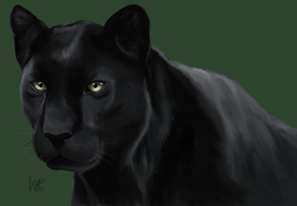 Black panther by AzouMidnight
