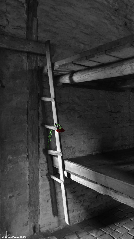 Auschwitz- Red tears of sorrow by Moonwolflove