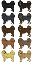 Dog :: Tibetan Mastiff by ArcticLily
