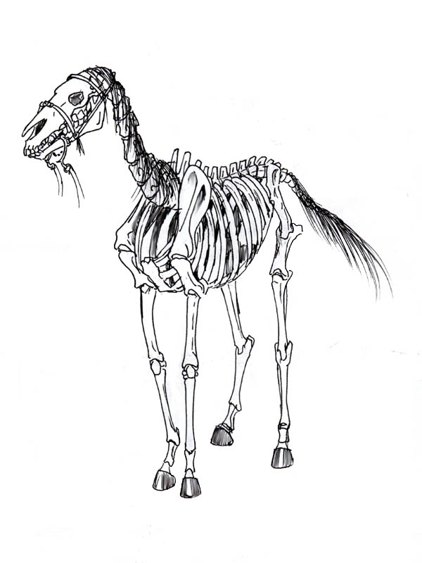 Esqueleto by Ameban on DeviantArt
