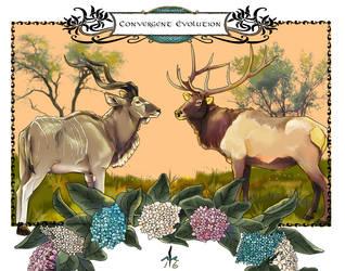 Convergent Evolution. by Ameban