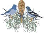 Blue Chaffinch by Ameban