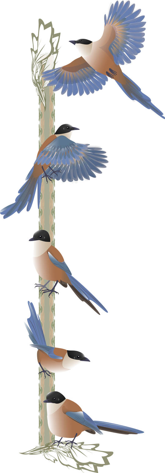 Blue winged Iberian Magpies