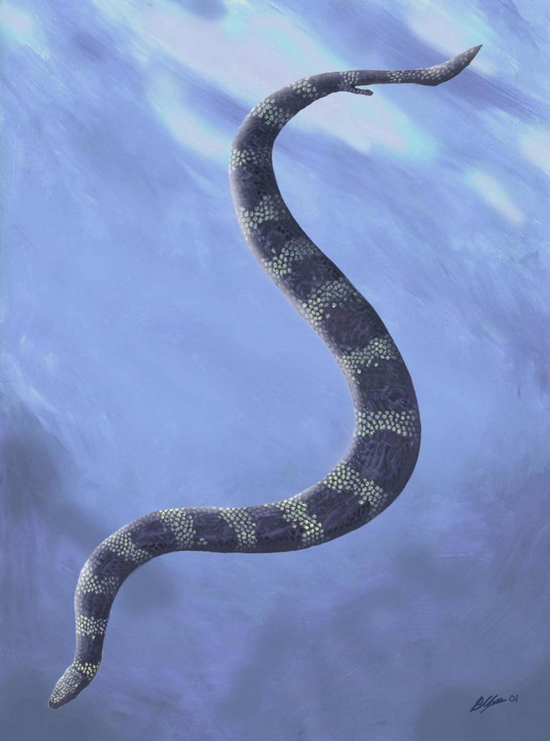 Pachyrhacis problematicus by Gogosardina