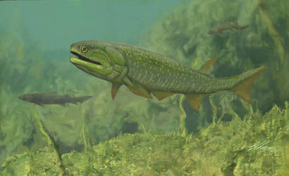 Cheirolepis and Osteolepis