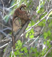 Microraptor and Sinornis (OLD VERSION) by Gogosardina
