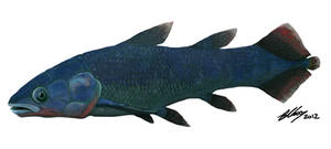Euporosteus yunnanensis
