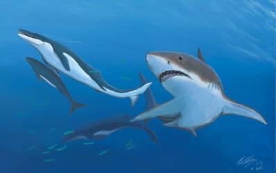 Eocene jaws by Gogosardina