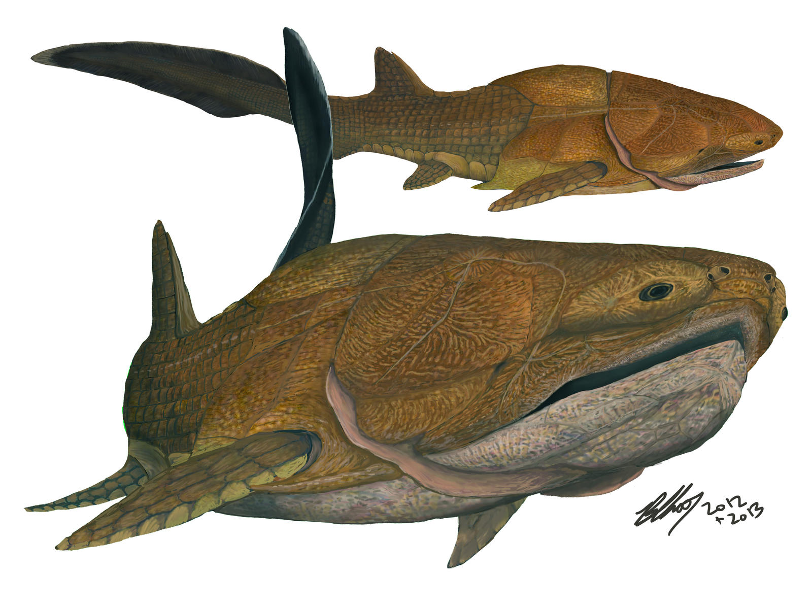 Entelognathus #4: Study of a weird fish by Gogosardina