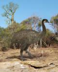 Elephant bird = The Kiwi's lost cousin