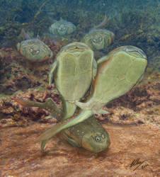 Microbrachius dicki = Sex in the Devonian