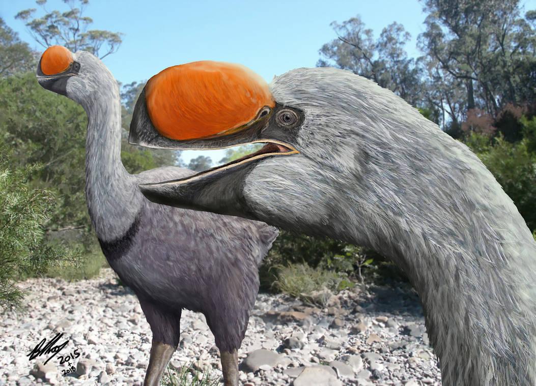 Dromornis planei (the former Bullockornis) by Gogosardina