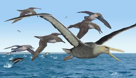 Giant Pelagornithid of Eocene Antarctica