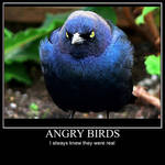 Angry Birds Desmotivational