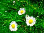 Three signs of summer. by ctrl-ur-bleed