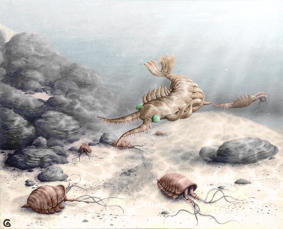 Anomalocaris And Leanochoilia