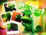 Pascal x Tangled