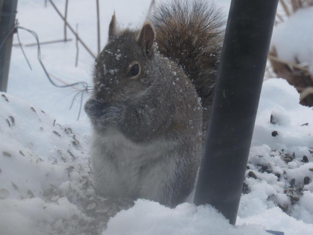 Snow Treat by SomeBlueFlower