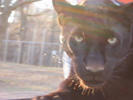 Black Panther by eingko