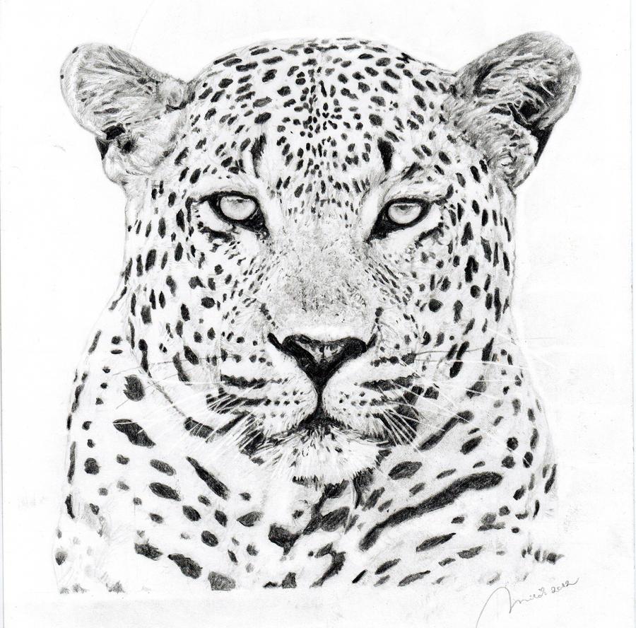 Leopard by Portretforyou