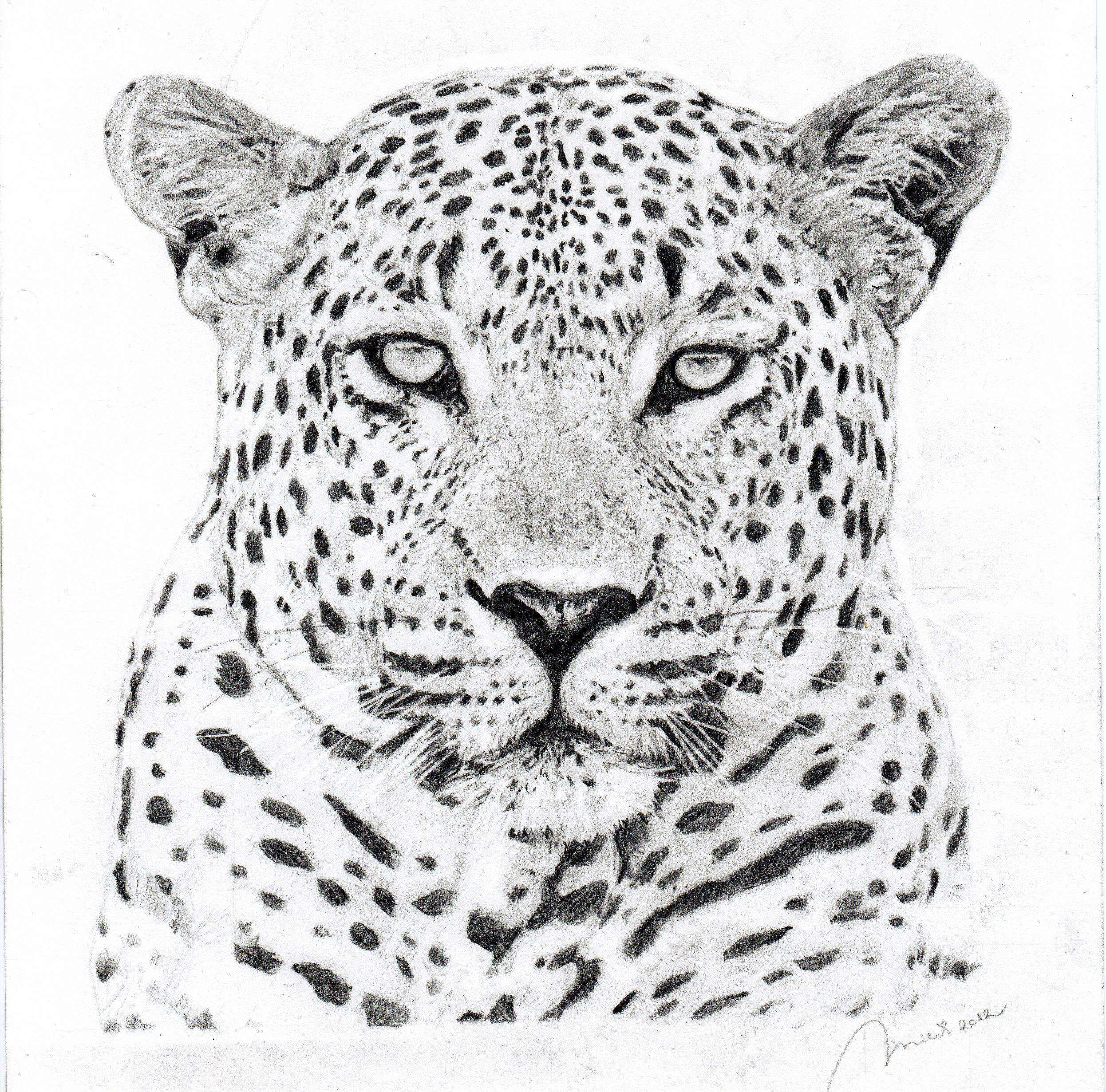 Leopard Pencil Drawings Leopard by Portretfory...