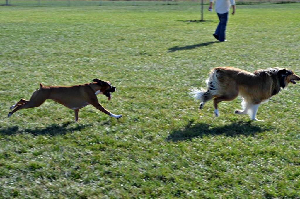 Day at the dog park by BigBadMatt