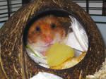 Rudi mit Kartoffel